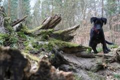 Chuckthedog.de